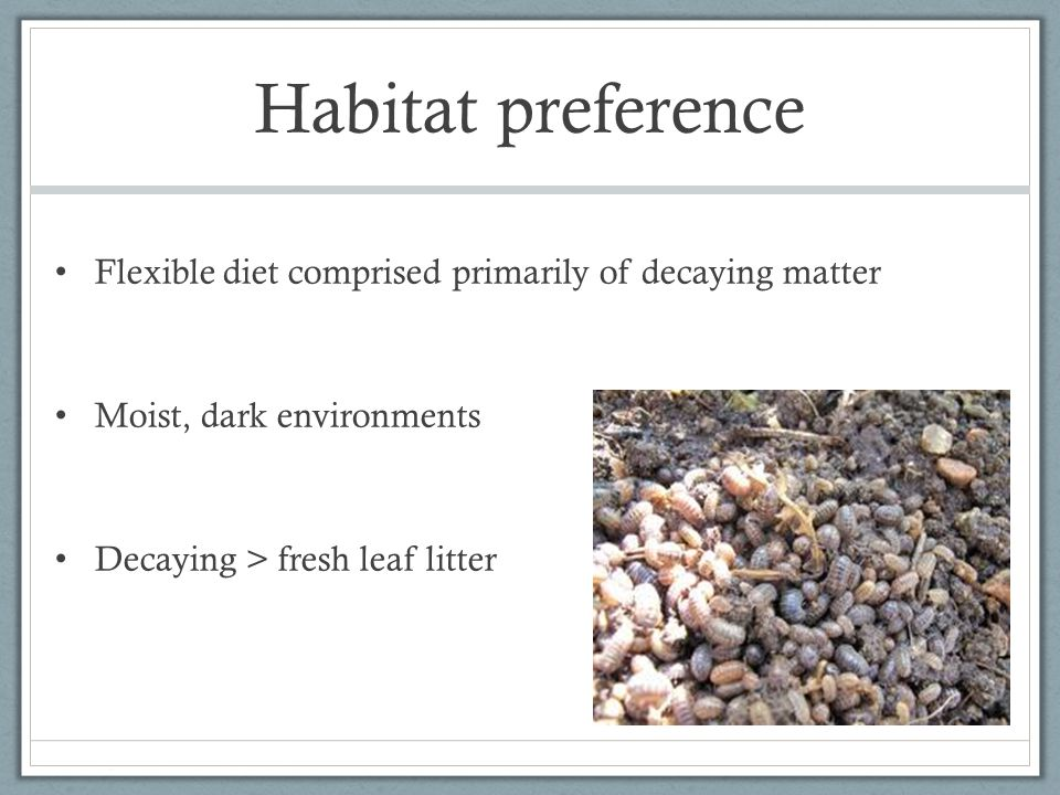 Habitat preference Flexible diet comprised primarily of decaying matter Moist, dark environments Decaying > fresh leaf litter