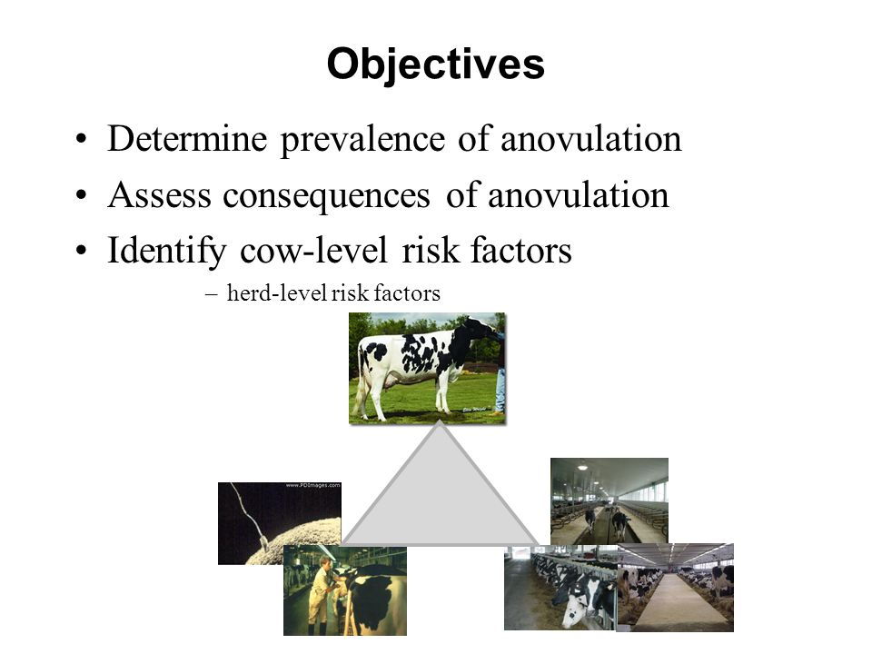 Objectives Determine prevalence of anovulation Assess consequences of anovulation Identify cow-level risk factors –herd-level risk factors