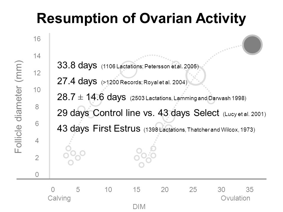 051015202530 35 Calving Ovulation DIM 16 14 12 10 8 6 4 2 0 Follicle diameter (mm) Resumption of Ovarian Activity 33.8 days (1106 Lactations; Petersson et al.