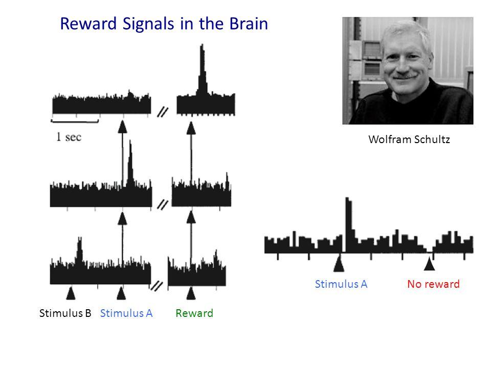 Stimulus B Stimulus A Reward Stimulus A No reward Wolfram Schultz Reward Signals in the Brain