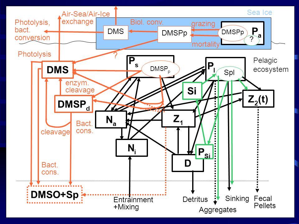 DMSP d NiNi NaNa Z 2 (t) DMSO+Sp DMS D Z1Z1 DMSP p PsPs Sinking Aggregates Detritus Entrainment +Mixing Photolysis Bact.
