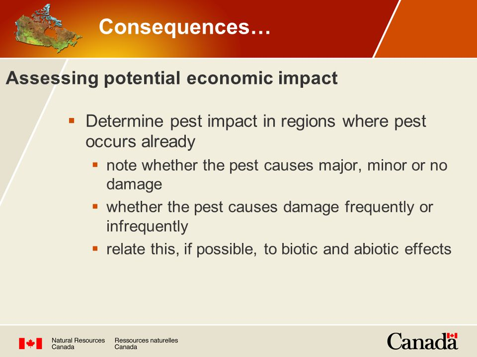 Assessing potential economic impact  Determine pest impact in regions where pest occurs already  note whether the pest causes major, minor or no damage  whether the pest causes damage frequently or infrequently  relate this, if possible, to biotic and abiotic effects Consequences…