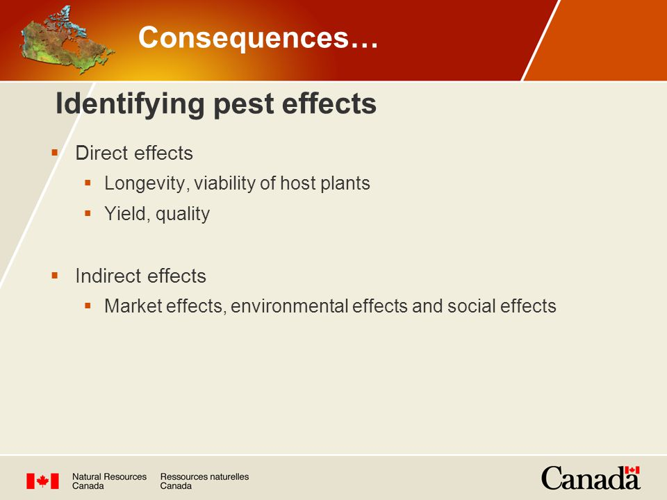Identifying pest effects  Direct effects  Longevity, viability of host plants  Yield, quality  Indirect effects  Market effects, environmental effects and social effects Consequences…
