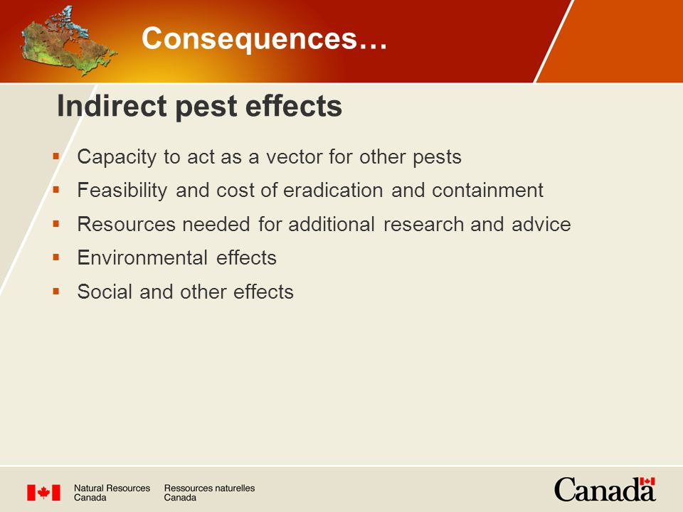 Indirect pest effects  Capacity to act as a vector for other pests  Feasibility and cost of eradication and containment  Resources needed for additional research and advice  Environmental effects  Social and other effects Consequences…