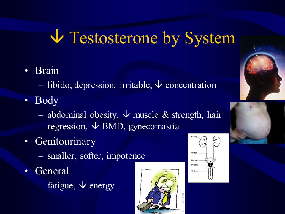  Testosterone by System Brain –libido, depression, irritable,  concentration Body –abdominal obesity,  muscle & strength, hair regression,  BMD, gynecomastia Genitourinary –smaller, softer, impotence General –fatigue,  energy