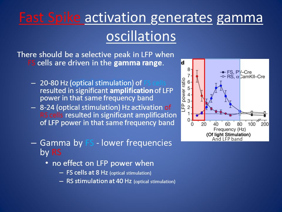Fast Spike activation generates gamma oscillations And LFP band
