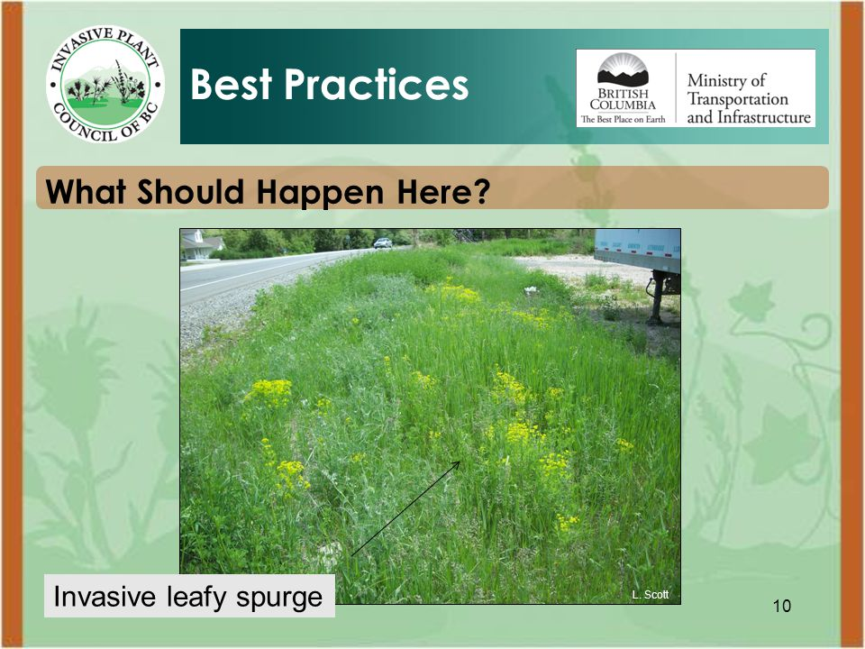 10 What Should Happen Here Best Practices L. Scott Invasive leafy spurge