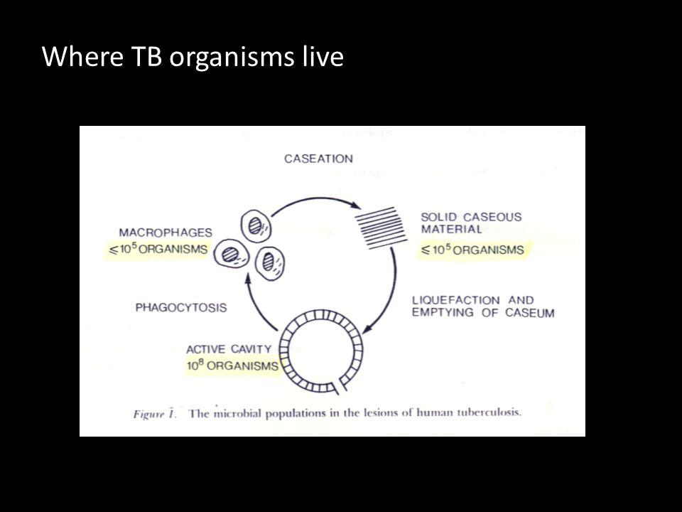 Where TB organisms live