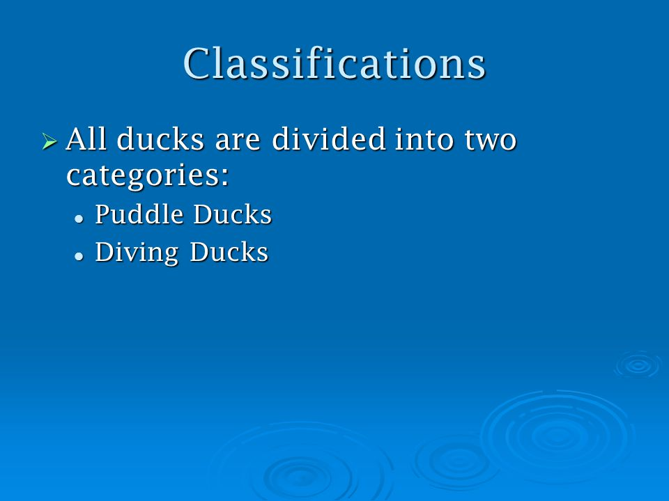 Classifications  All ducks are divided into two categories: Puddle Ducks Puddle Ducks Diving Ducks Diving Ducks