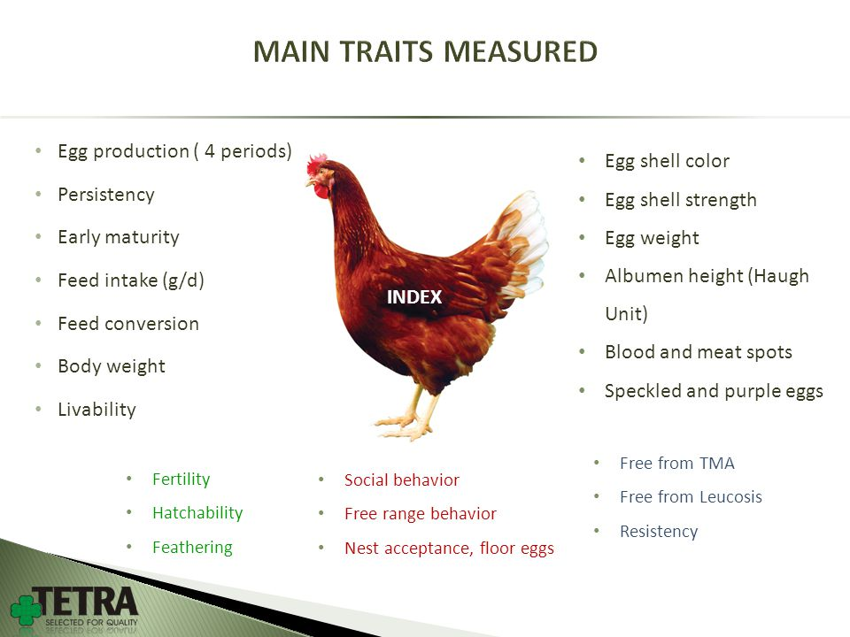 Egg production ( 4 periods) Persistency Early maturity Feed intake (g/d) Feed conversion Body weight Livability Egg shell color Egg shell strength Egg weight Albumen height (Haugh Unit) Blood and meat spots Speckled and purple eggs Social behavior Free range behavior Nest acceptance, floor eggs Free from TMA Free from Leucosis Resistency INDEX Fertility Hatchability Feathering