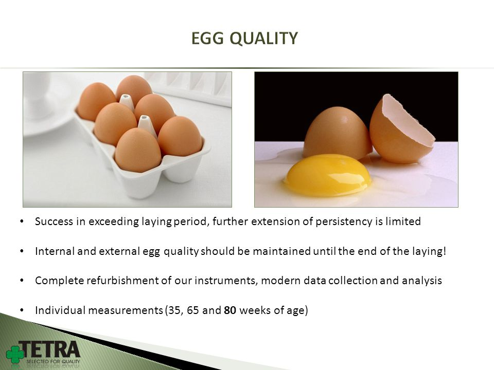 Success in exceeding laying period, further extension of persistency is limited Internal and external egg quality should be maintained until the end of the laying.