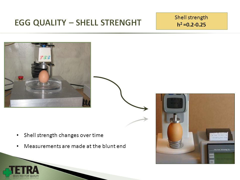 Shell strength h 2 =0.2-0.25 Shell strength changes over time Measurements are made at the blunt end