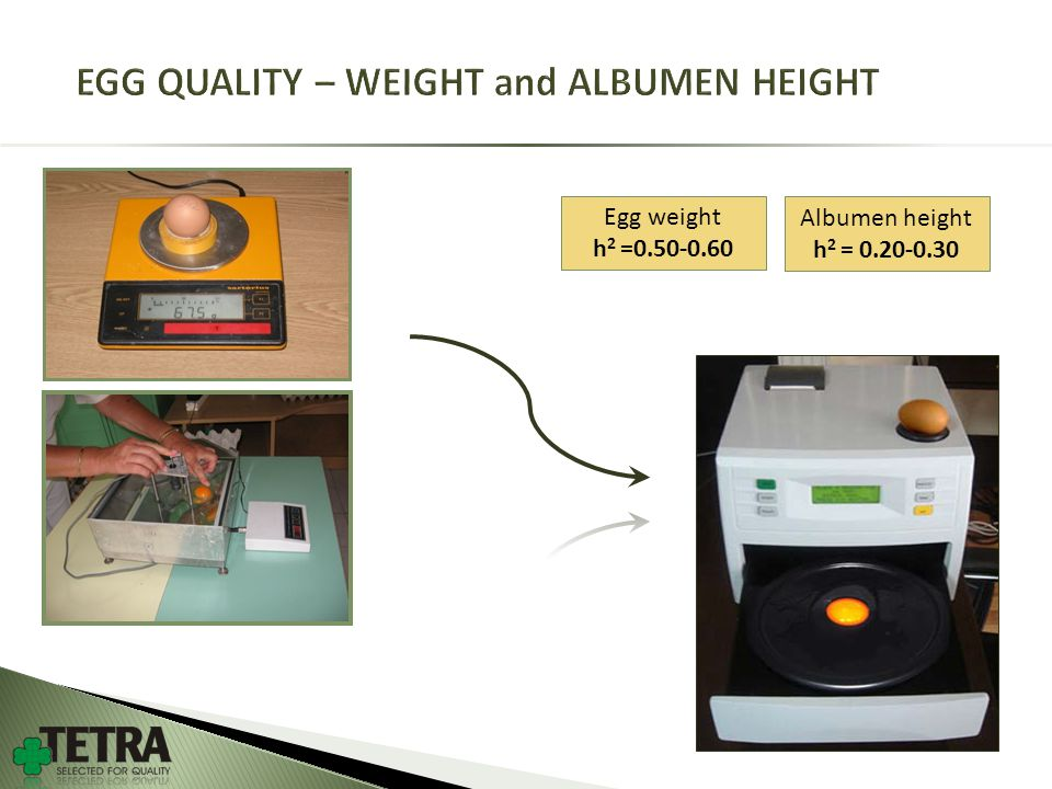 Egg weight h 2 =0.50-0.60 Albumen height h 2 = 0.20-0.30