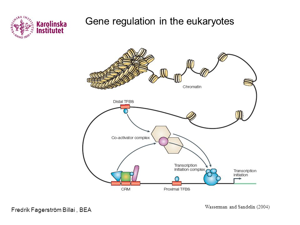 Fredrik Fagerström Billai, BEA Gene regulation in the eukaryotes Wasserman and Sandelin (2004)
