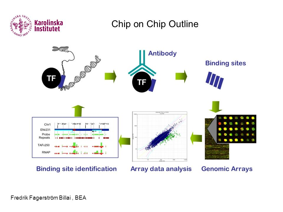 Fredrik Fagerström Billai, BEA Chip on Chip Outline