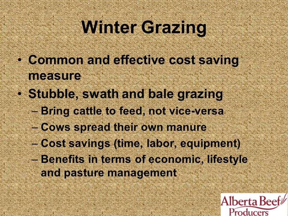 Winter Grazing Common and effective cost saving measure Stubble, swath and bale grazing –Bring cattle to feed, not vice-versa –Cows spread their own manure –Cost savings (time, labor, equipment) –Benefits in terms of economic, lifestyle and pasture management