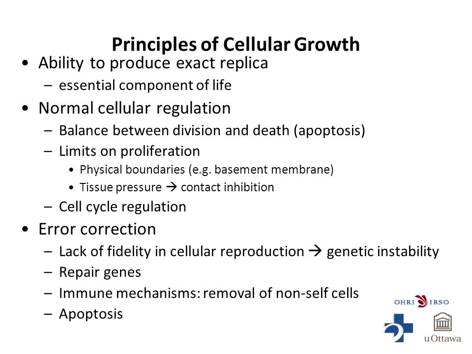 Principles of Cellular Growth Ability to produce exact replica –essential component of life Normal cellular regulation –Balance between division and death (apoptosis) –Limits on proliferation Physical boundaries (e.g.