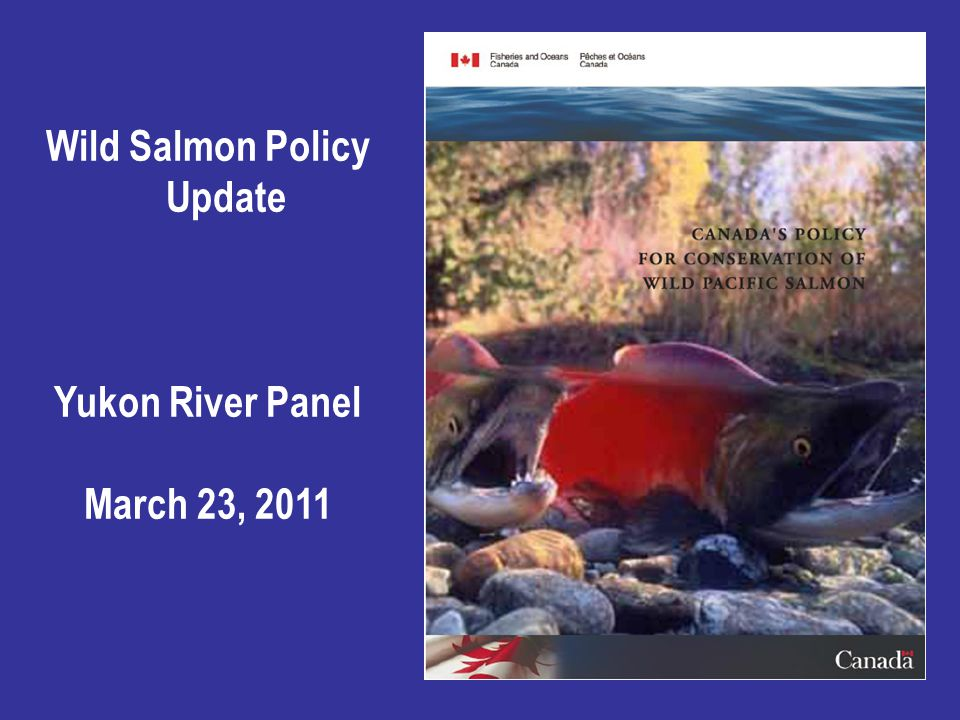 Wild Salmon Policy Update Yukon River Panel March 23, 2011