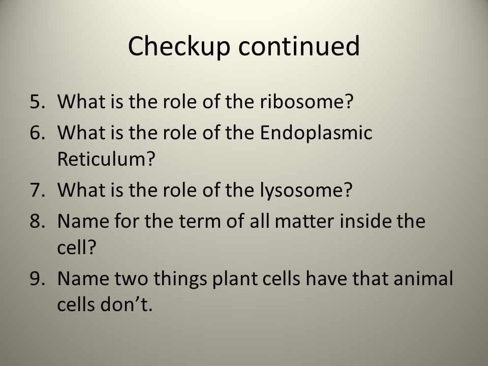 Checkup continued 5.What is the role of the ribosome.