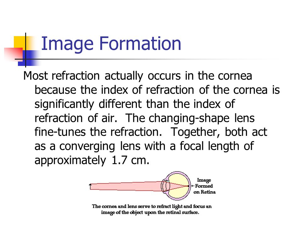Image Formation Most refraction actually occurs in the cornea because the index of refraction of the cornea is significantly different than the index of refraction of air.