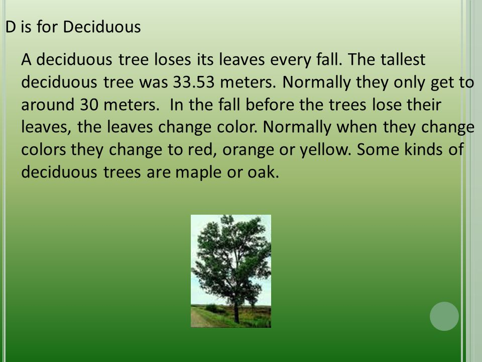 D is for Deciduous A deciduous tree loses its leaves every fall.