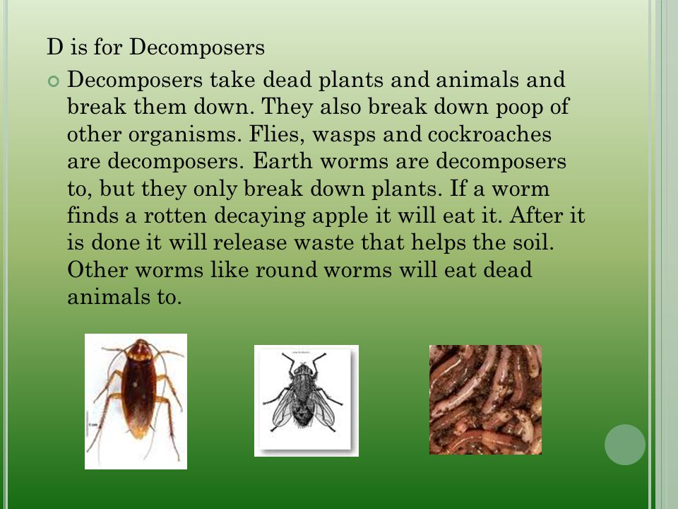 D is for Decomposers Decomposers take dead plants and animals and break them down. They also break down poop of other organisms. Flies, wasps and cock