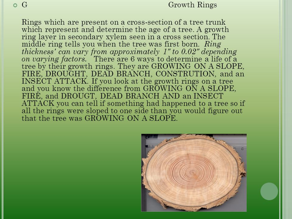 G Growth Rings Rings which are present on a cross-section of a tree trunk which represent and determine the age of a tree.