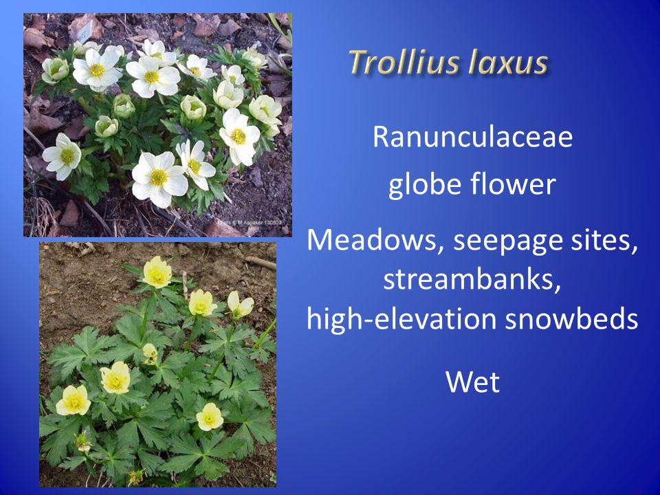 Ranunculaceae globe flower Meadows, seepage sites, streambanks, high-elevation snowbeds Wet