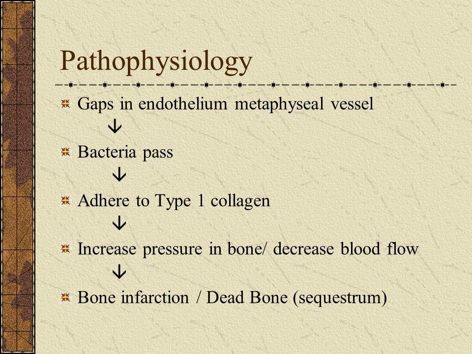 Pathophysiology Gaps in endothelium metaphyseal vessel  Bacteria pass  Adhere to Type 1 collagen  Increase pressure in bone/ decrease blood flow  Bone infarction / Dead Bone (sequestrum)