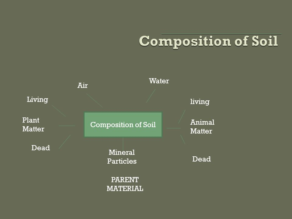 Composition of Soil Animal Matter living Dead Water Air Plant Matter Dead Living Mineral Particles PARENT MATERIAL