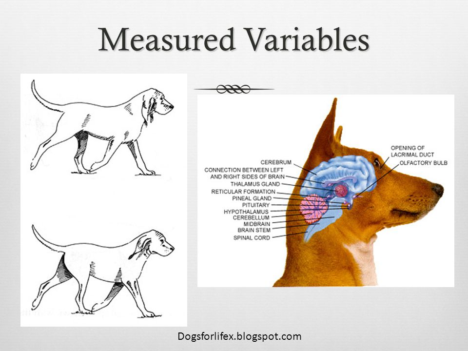 Measured Variables Dogsforlifex.blogspot.com