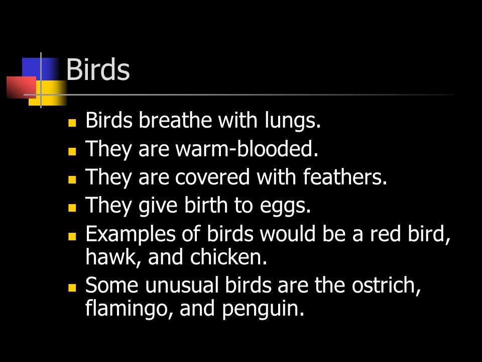 Birds Birds breathe with lungs. They are warm-blooded. They are covered with feathers. They give birth to eggs. Examples of birds would be a red bird,