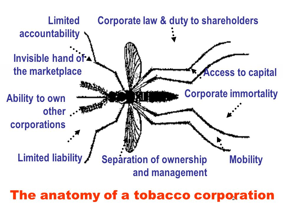 24 Limited liability Mobility Access to capital Ability to own other corporations Separation of ownership and management The anatomy of a tobacco corporation Corporate immortality Corporate law & duty to shareholdersLimited accountability Invisible hand of the marketplace