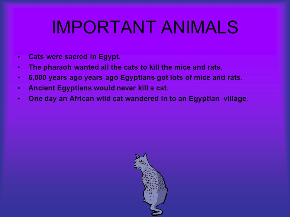 IMPORTANT ANIMALS Cats were sacred in Egypt.