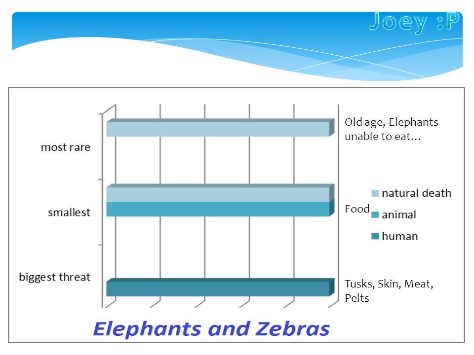 Zebras are related to these 3 animals:. Elephant seals Mammoths Horses Donkeys Quggas (extinct) Hyrax Elephants: Extinct