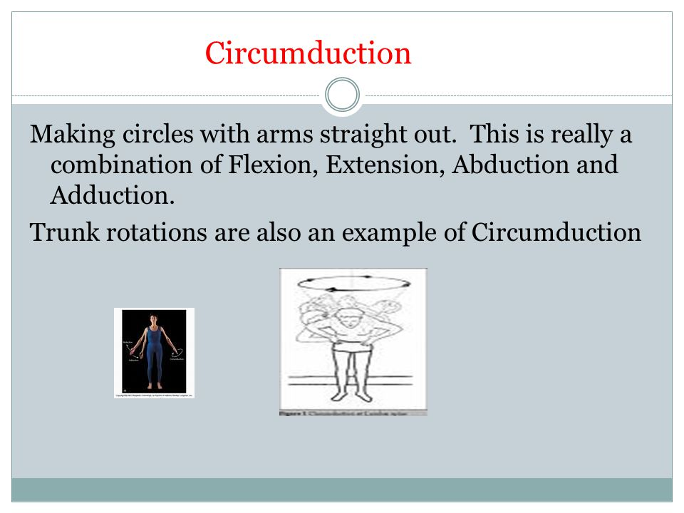Circumduction Making circles with arms straight out. This is really a combination of Flexion, Extension, Abduction and Adduction. Trunk rotations are