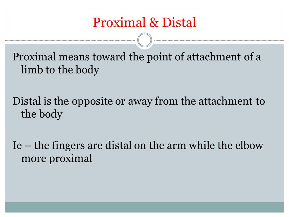 Proximal & Distal Proximal means toward the point of attachment of a limb to the body Distal is the opposite or away from the attachment to the body I