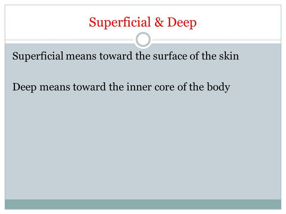 Superficial & Deep Superficial means toward the surface of the skin Deep means toward the inner core of the body