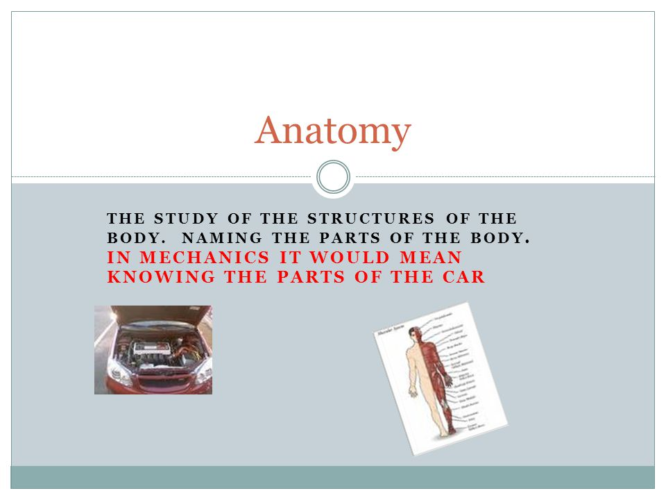 THE STUDY OF THE STRUCTURES OF THE BODY. NAMING THE PARTS OF THE BODY. IN MECHANICS IT WOULD MEAN KNOWING THE PARTS OF THE CAR Anatomy