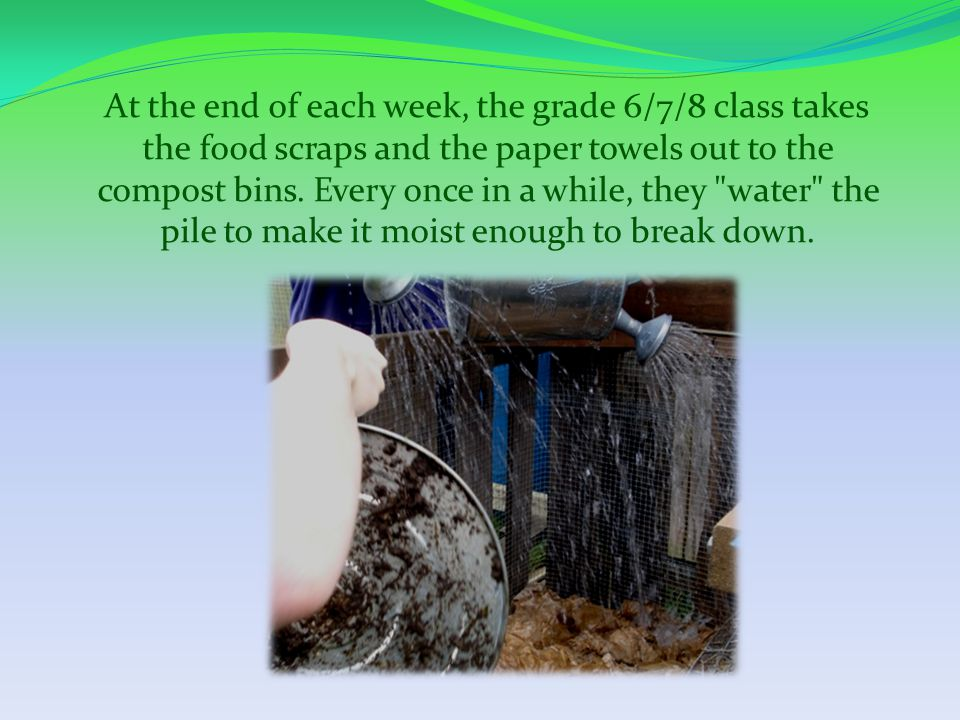 At the end of each week, the grade 6/7/8 class takes the food scraps and the paper towels out to the compost bins.