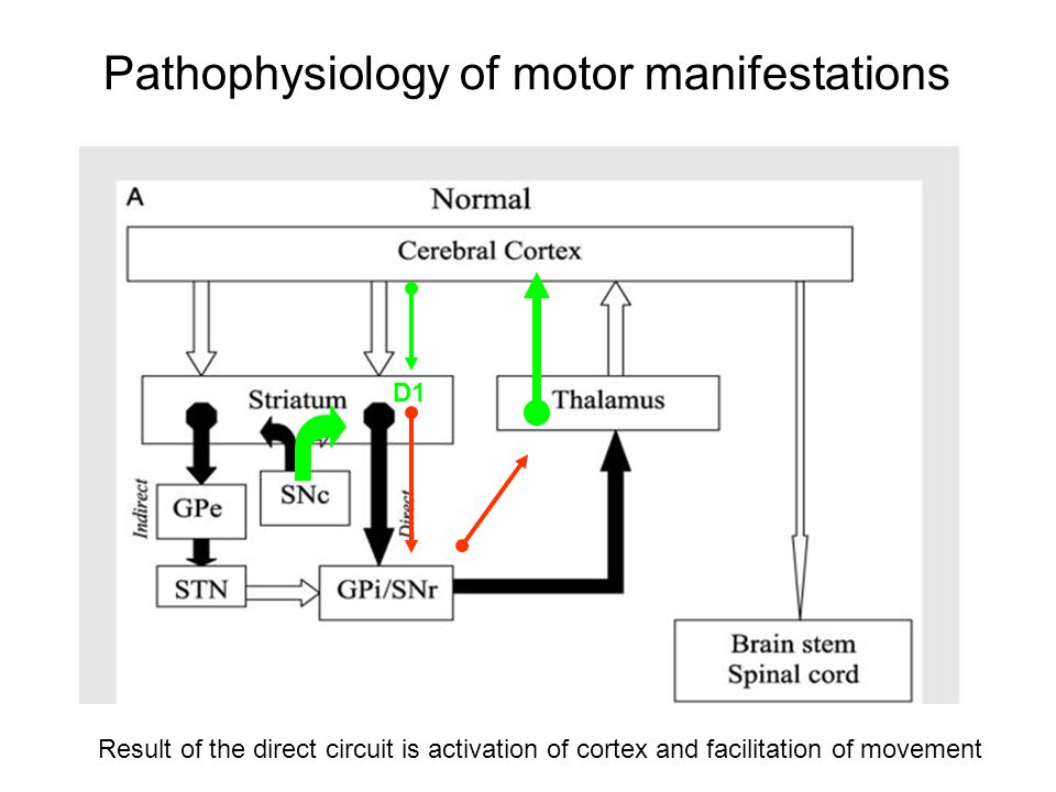 Pathophysiology of motor manifestations Result of the direct circuit is activation of cortex and facilitation of movement D1