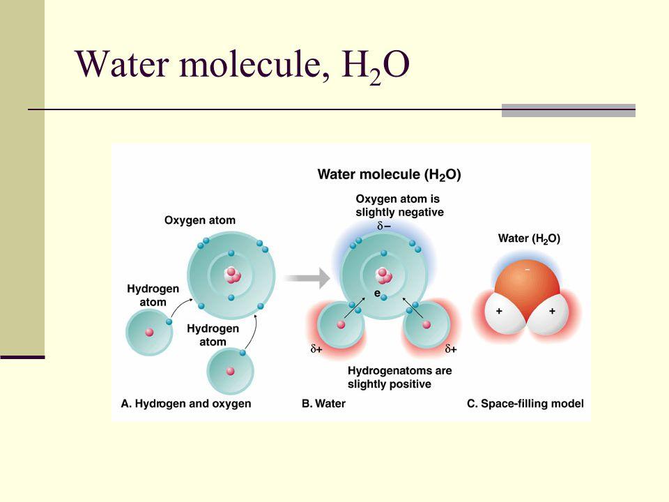 Water molecule, H 2 O