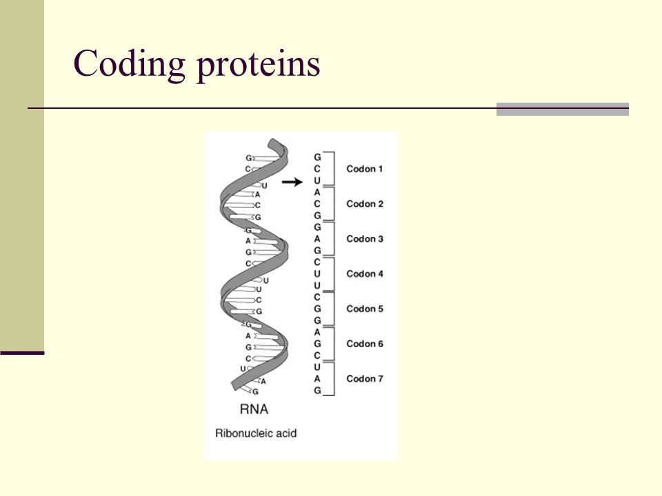 Coding proteins