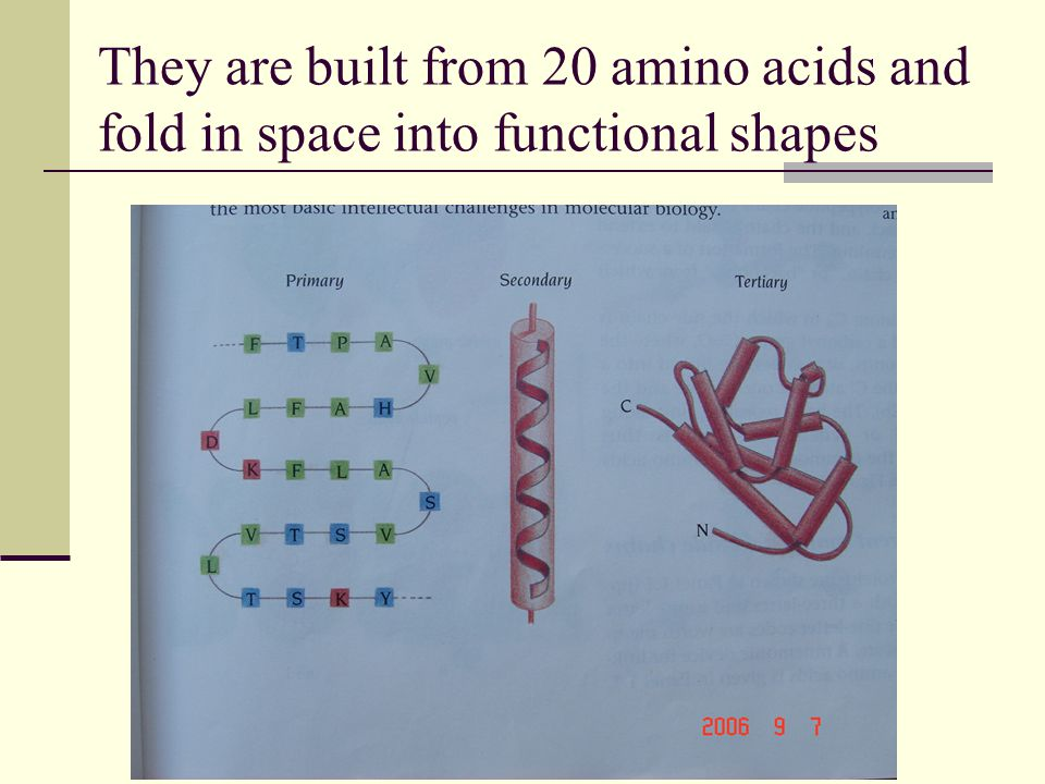 They are built from 20 amino acids and fold in space into functional shapes