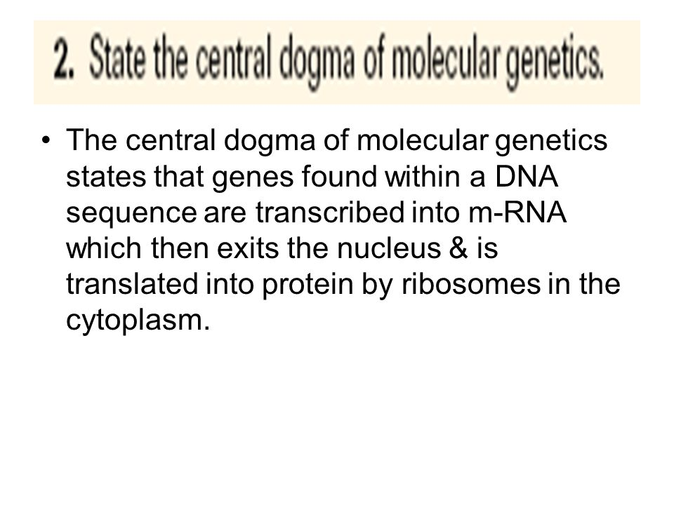 Ribosomes are the site of protein synthesis M-RNA is formed by transcription and carries the message from the DNA to direct the protein being formed.