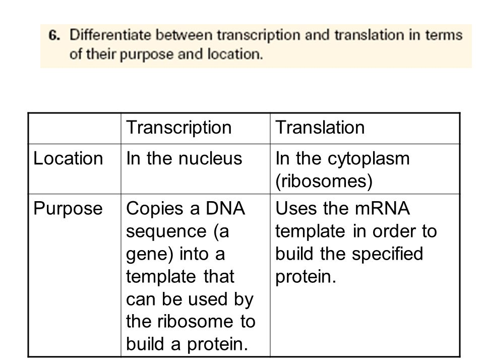 4.Differentiate between introns and exons.