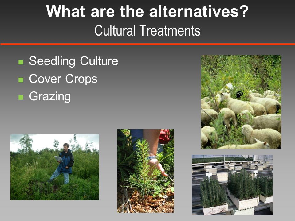What are the alternatives Cultural Treatments Seedling Culture Cover Crops Grazing
