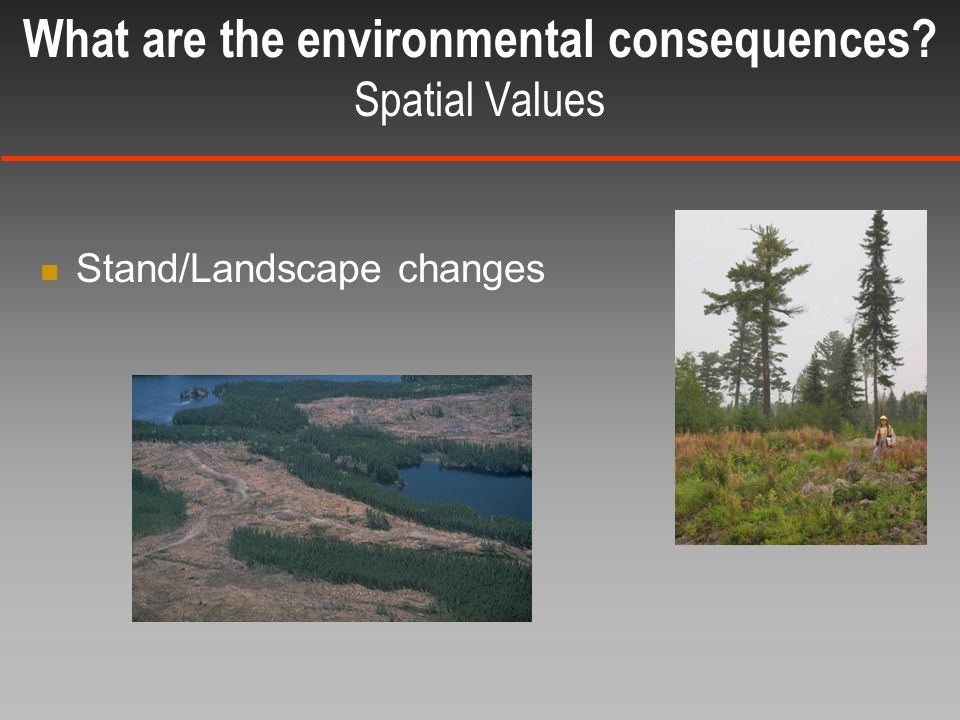 Stand/Landscape changes What are the environmental consequences Spatial Values