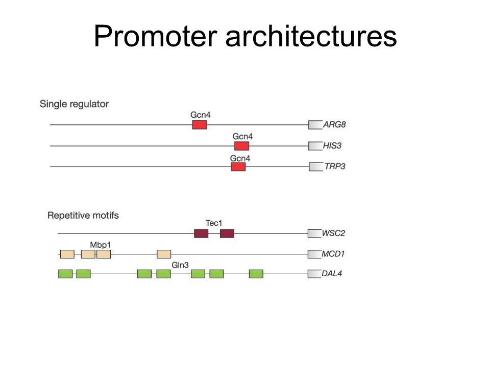 Promoter architectures