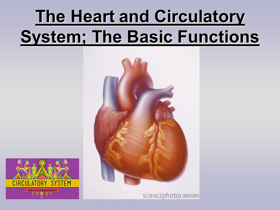 What are the main parts of the Circulatory System?